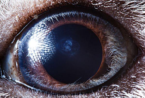 惊悚!动物眼睛微距摄影