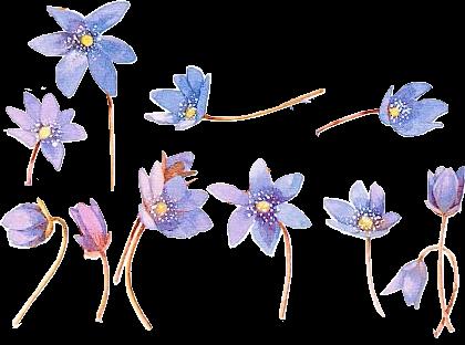 【透明png素材】花类png免抠素材a