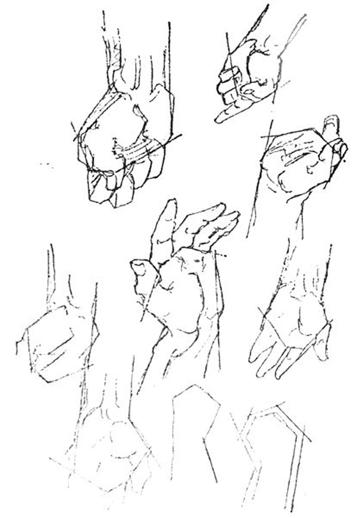 符合圆柱体的透视规律.-最全的素描手部结构图,超牛图片