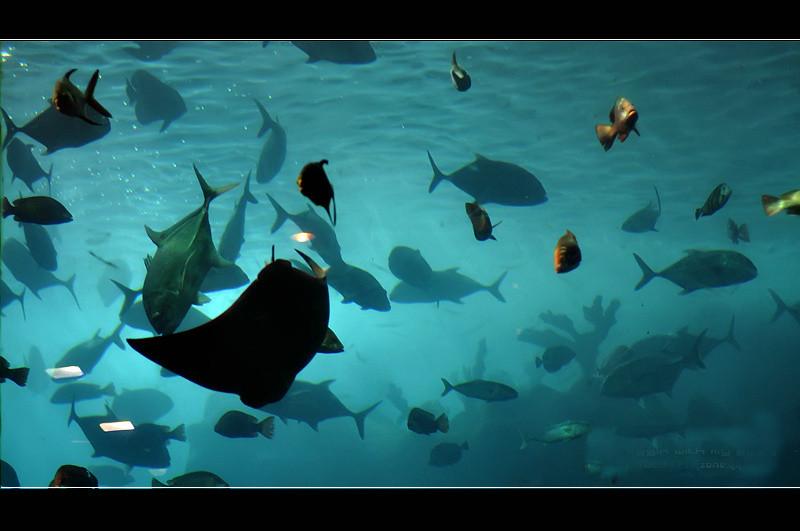 【动物世界素材篇】高清唯美的海底世界