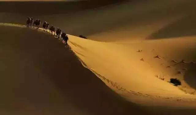 小提琴《天边的骆驼》,美的让你窒息图片