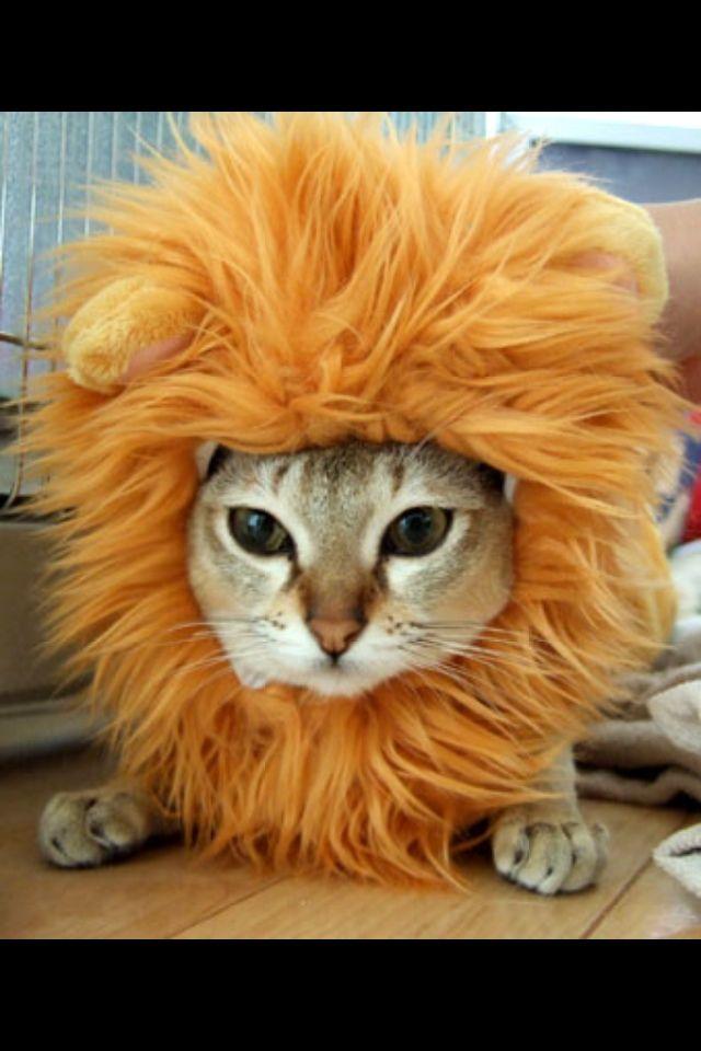 可爱的猫猫: 【搞笑猫咪图】搞笑猫咪全集,让你一次看
