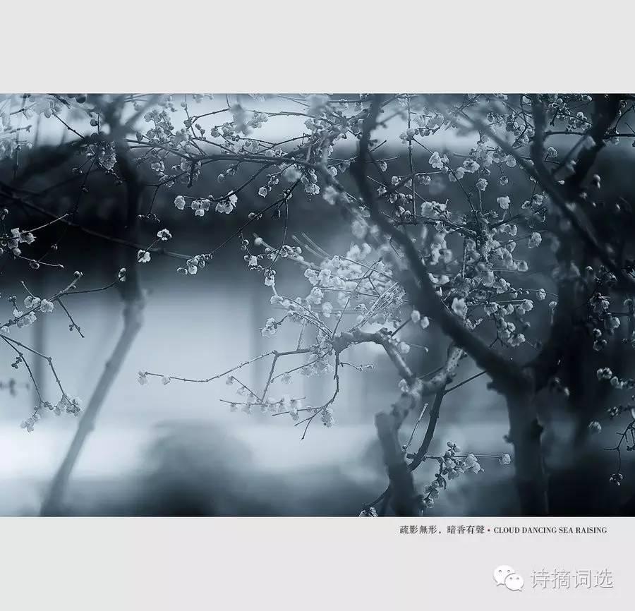 【丁香雅集】诗词诗社|2016年优秀诗社微刊第11期丁香味钓鱼图片